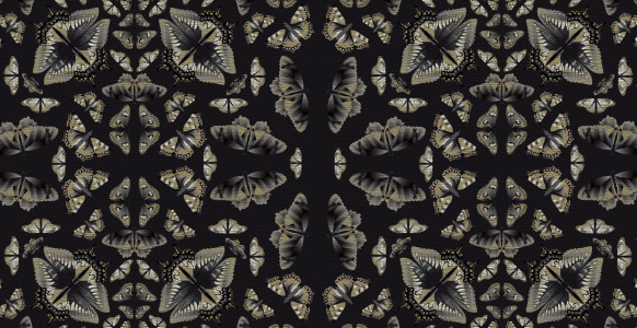 wallpaper_butterflies_black_web
